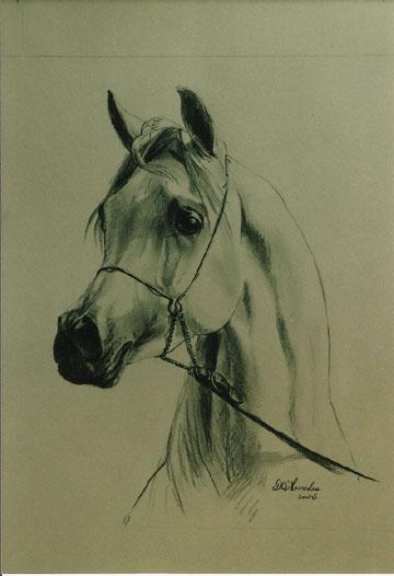 portret konia 2, 45x32.jpg