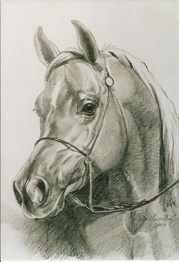 portret konia 3, 45x32.jpg