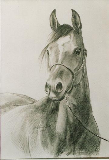 portret konia, 43x32,.jpg