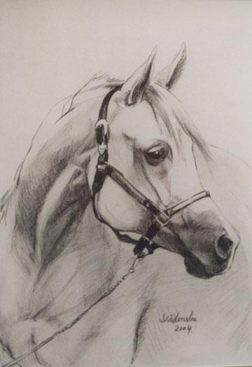 portret konia, olowek, 45x32.jpg